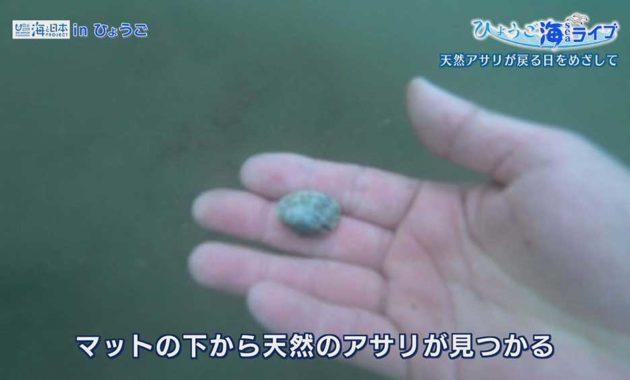 ひょうご海ライブ第18回写真6