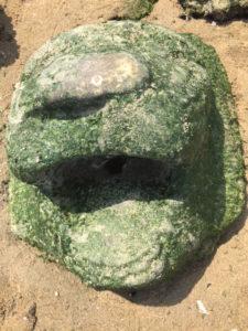 170610ライオン岩