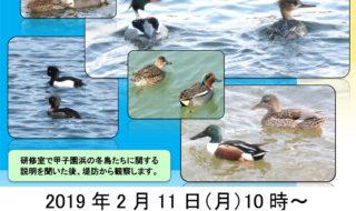 2019年 甲子園浜 冬の鳥観察会