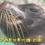 0604動物が歯磨き-youtubethum
