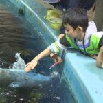 魚にさわる子ども00000000